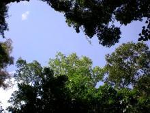夫婦世界旅行-妻編-空の見えるジャングル