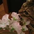 お花を飾る