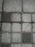 植物園石畳風