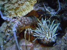 聖亜珊瑚世界4