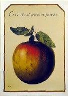 これはリンゴではない