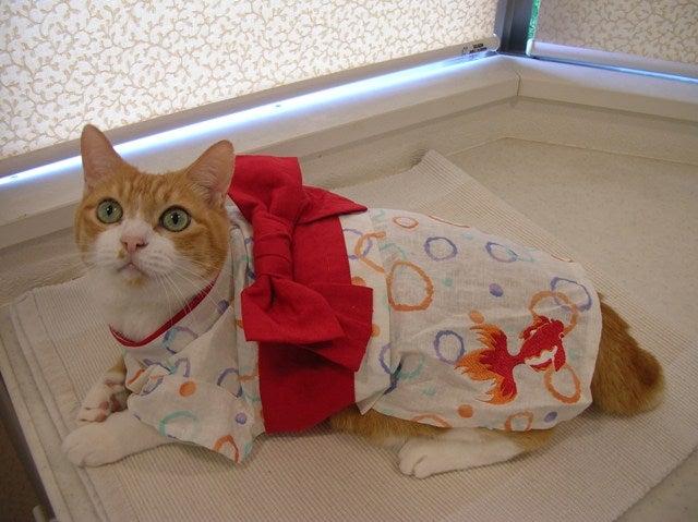 ぽっぽ浴衣