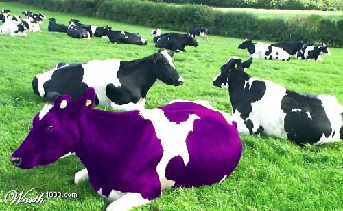∞最前線 通信-Purple Cow☆