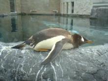 hetare-penguin