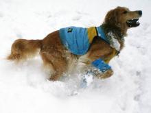 深~い雪の中を、ハマりながら泳ぎまくって~