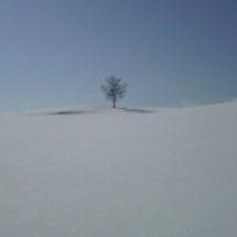 KOTOKOの木