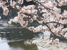 CONTE BLEU-桜