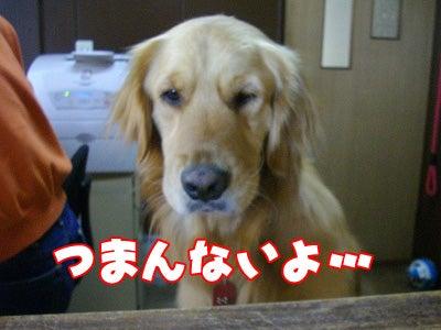 ペットと泊まれる宿 しぶごえ館山弐号館スタッフブログ-つまんない・・・