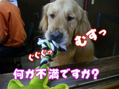 ペットと泊まれる宿 しぶごえ館山弐号館スタッフブログ-不満ですか?