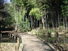 机上都市第三公園-竹林