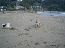Mrs.Luckyのラッキー・チャ・チャ・チャ!-私達家族だけ... 独占の砂浜。