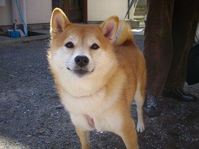 ペットと泊まれる宿 しぶごえ館山弐号館スタッフブログ