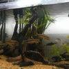 熱帯魚の画像
