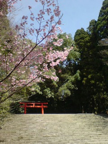流転の民の日本放浪記-20090313213749.jpg