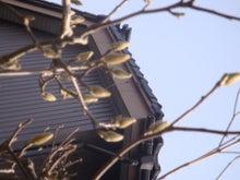 Music Planet ~心に響く歌詞をあなたに 【管理人の日記も公開中!】~-鳥に見えた!!