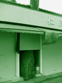 ◆ cinemazoo-奈良公園の木