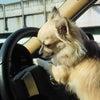 運転中~♪の画像