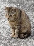 怒れる小さな茶色い犬-090321g