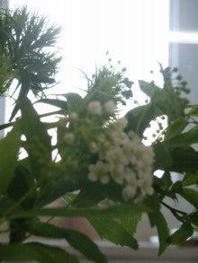 kuri-ga-tela-お花