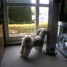 窓の外には・・・