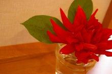 柿ピーの日記「なんかいろいろ」-赤い花