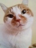 猫ごはん シャム猫風