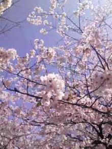 太陽族花男のオフィシャルブログ「太陽族★花男のはなたれ日記」powered byアメブロ-春、今年も迎えられた。