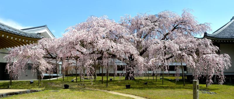 西陣に住んでます-醍醐寺霊宝館