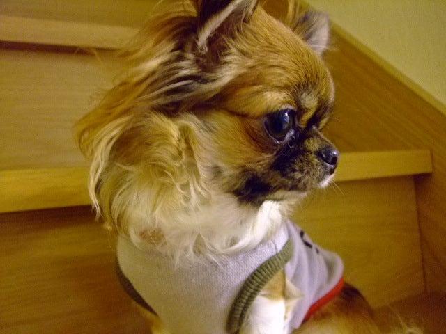 俺と犬と犬服作り。-070