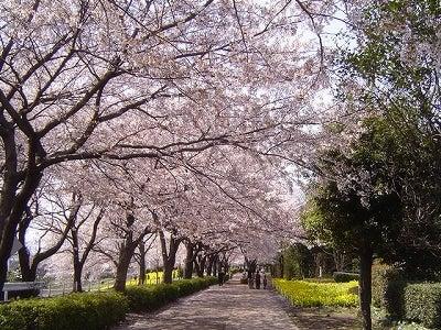 29歳で年収1億円&著書37万部になった、世界を旅するヒマリッチ社長川島和正の日記-sakura