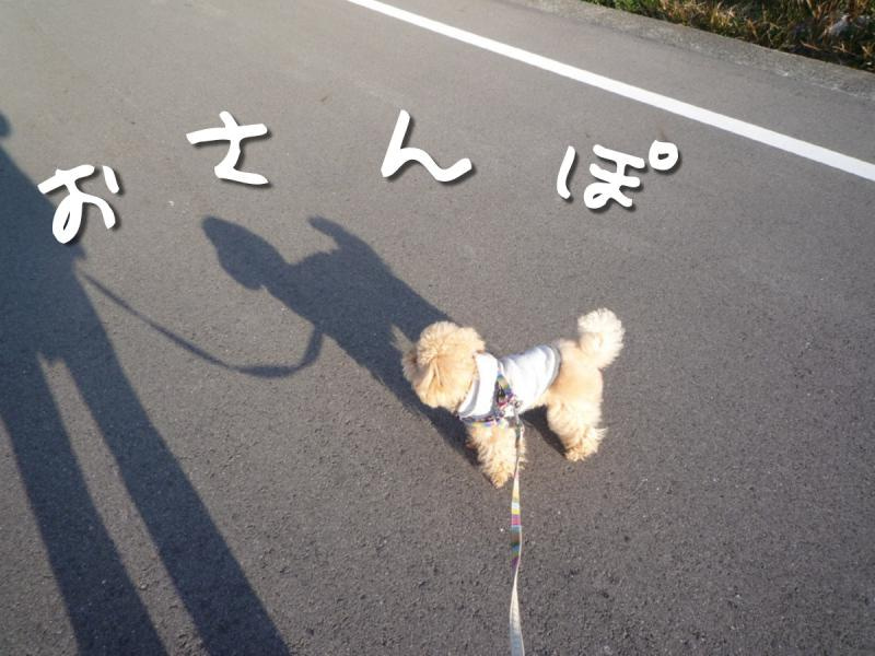 わんグルメ【トイプー♂とカニンヘンダックス♀の毎日】-kaito