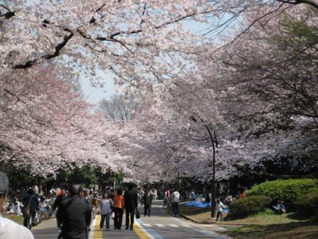 TheoBlog     -テオブログ--@駒沢公園