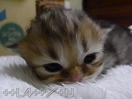 ++ L4 ++  ~ チンチラ猫レオンのヤンチャな毎日 ~-20090404A