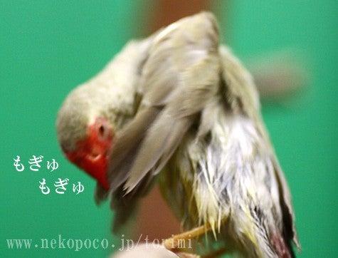 ようこそ!とりみカフェ!!~鳥の写真や鳥カフェでの出来事~-もぎゅもぎゅこもさん