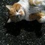いつかの近所の猫。