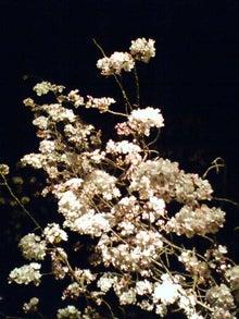 商品・製品を守る知恵-2009桜