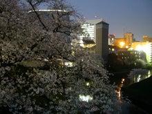 続 東京百景(BETA version)-#029 牛ヶ淵の夕桜