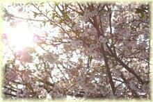 毎日はっぴぃ気分☆-光桜