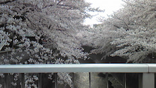 会長日記 -JASTOCS会長の日記ブログ--20090405花見@神田川.jpg
