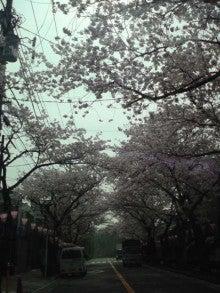 Atom☆LonのBUHI日記-sakura1