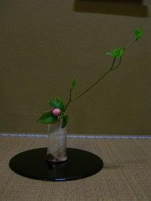 宗裕の「茶花記」-乙女椿と花筏
