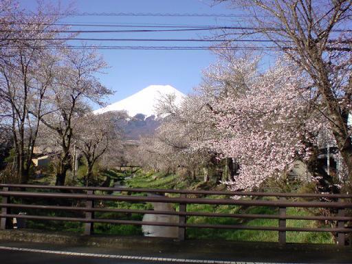 【山梨県発】 Fスタイル                (富士山 富士五湖 ふるさと) -20090415-5忍野村お宮橋から見た富士山
