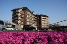 きららラポール尾道のブログ-芝桜とラポール