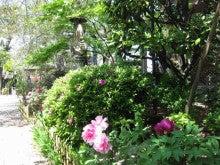 【谷中】 「まるごとマイタウン東京」ブログ-養福寺7