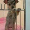 ★I LOVE DOG★の画像