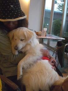 Mrs.Luckyのラッキー・チャ・チャ・チャ!-リリー、抱っこで うとうと。。