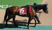 【競馬よ今宵も有難う】馬、牧場、富士山の写真と生活を懸けた競馬予想!-ハシッテホシーノ@フローラS