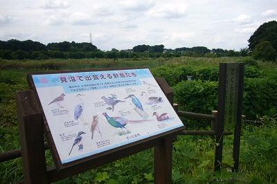 七里・大和田 地域探訪ブログ-七里総合公園_鳥表示板