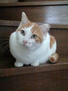 ずれずれブログ…湘南で猫と暮らせば…-090501_1038~0001-0001.jpg