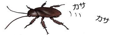 ゴキブリのしぶとさの秘密 | 川崎悟司 オフィシャルブログ 古世界の ...